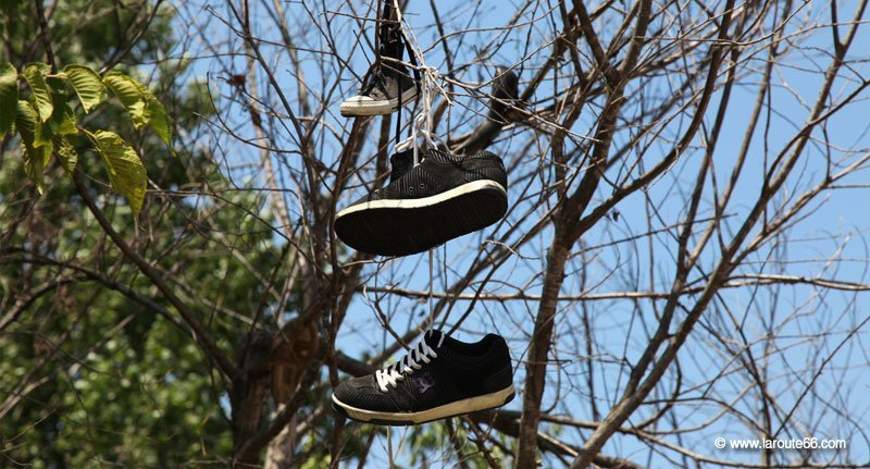 Shoe Tree Trading Post